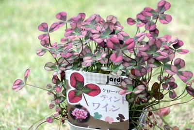 クローバー赤花