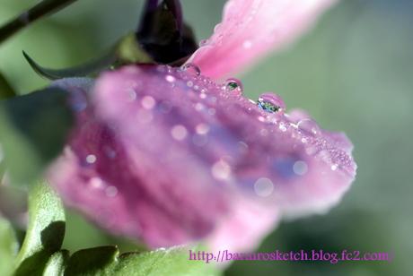 雨上がりの朝2