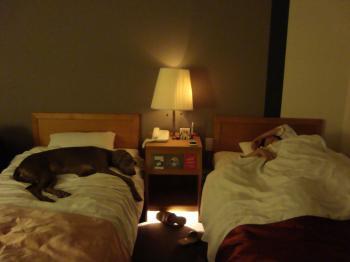 Woof_room5.jpg