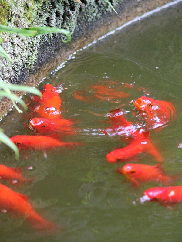fc2blog_20120716223500d76.jpg