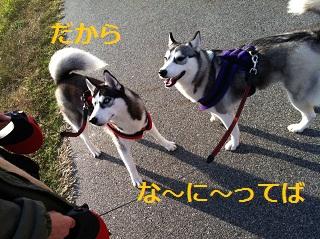 20121109211434fd5.jpg