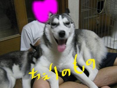 snap_cherimiru_2012111101918.jpg