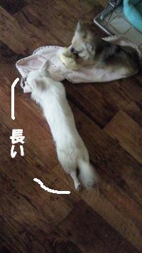 2012070610464698e.jpg