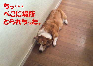 20120918112614135.jpg