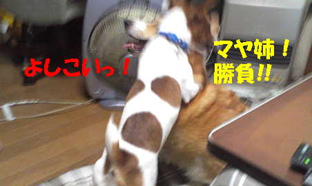 201211071053034e7.jpg