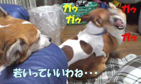 20121107105451302.jpg