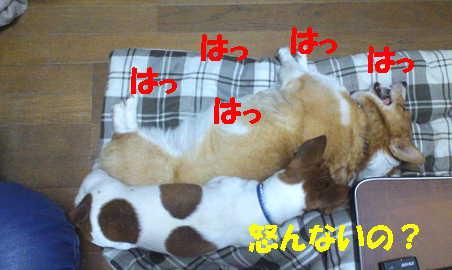2012110710545230f.jpg