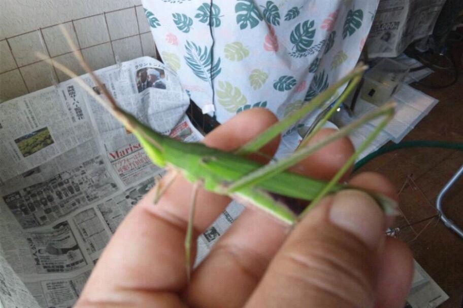 fc2blog_20120908191456f5a.jpg