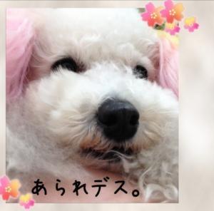 image_20130414142239.jpg