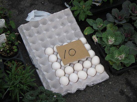 八戸館鼻岸壁朝市 卵100円