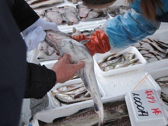 鱈の中に白子が入っているか確認方法