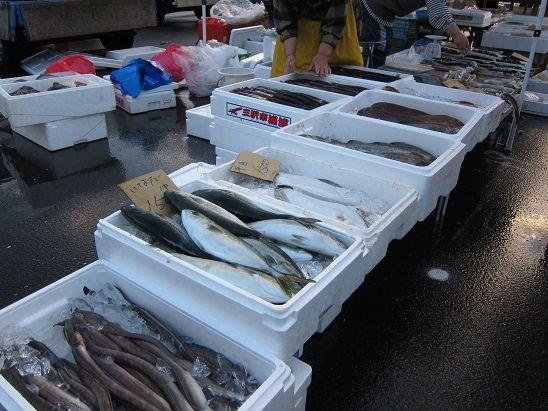 2014年 八戸イカ大漁