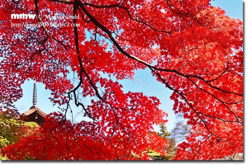 kyoto_au12.jpg