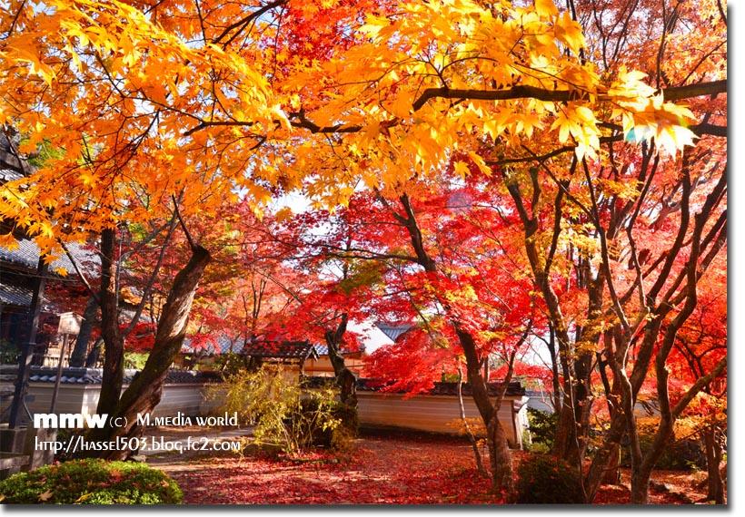 kyoto_au16.jpg