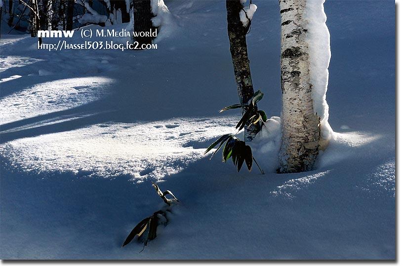 rusutu_01_20121229223902.jpg