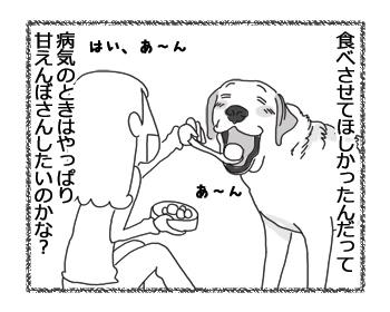 羊の国のラブラドール絵日記シニア!!「おかえり!クロエちゃん」4