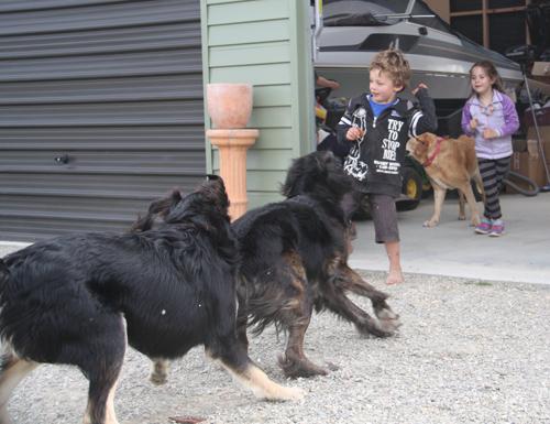 羊の国のラブラドール絵日記シニア!!「Dog's Party」4