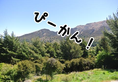 羊の国のラブラドール絵日記シニア!!「ダメ!無理しちゃ」2