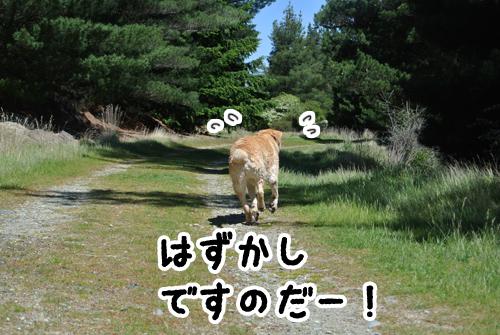 羊の国のラブラドール絵日記シニア!!「ダメ!無理しちゃ」5