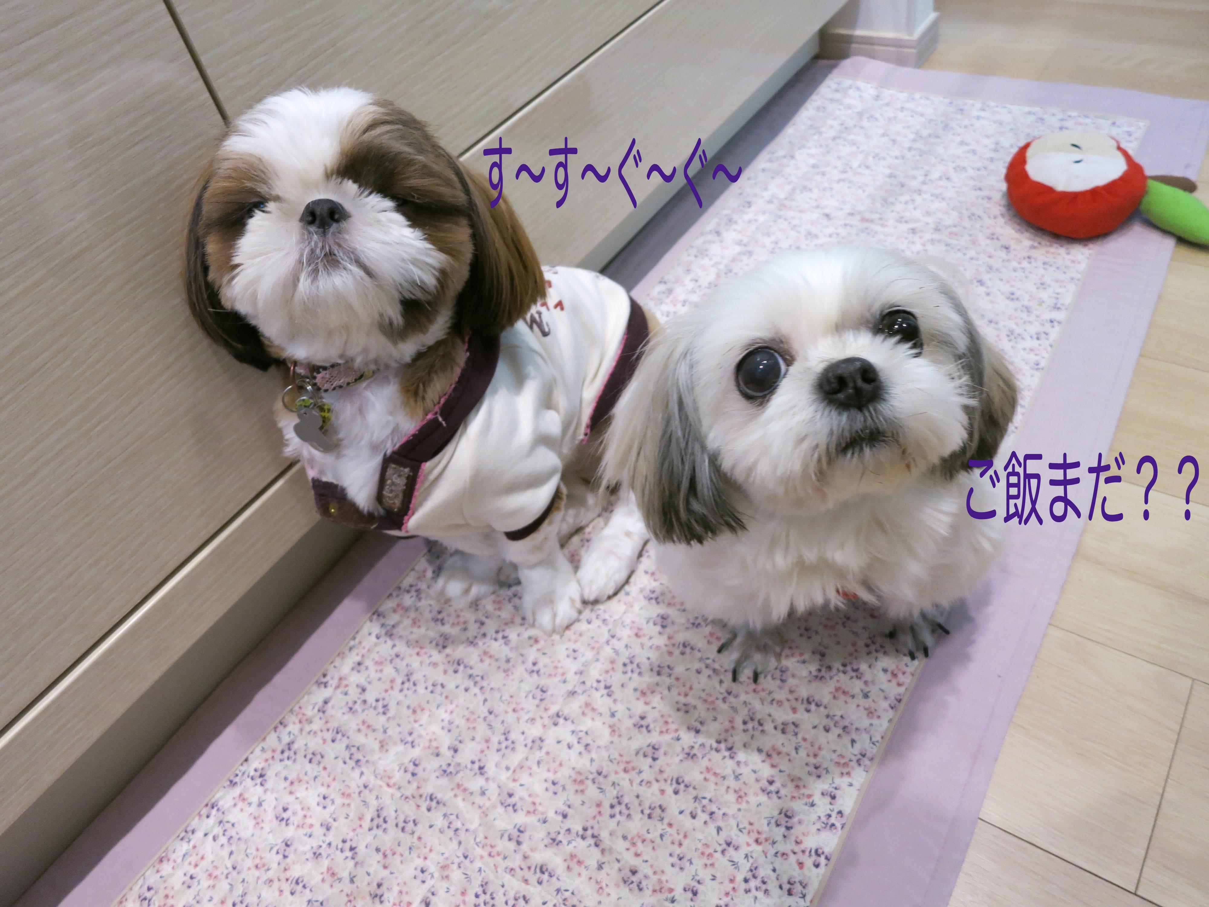 mikuhana1_3929.jpg