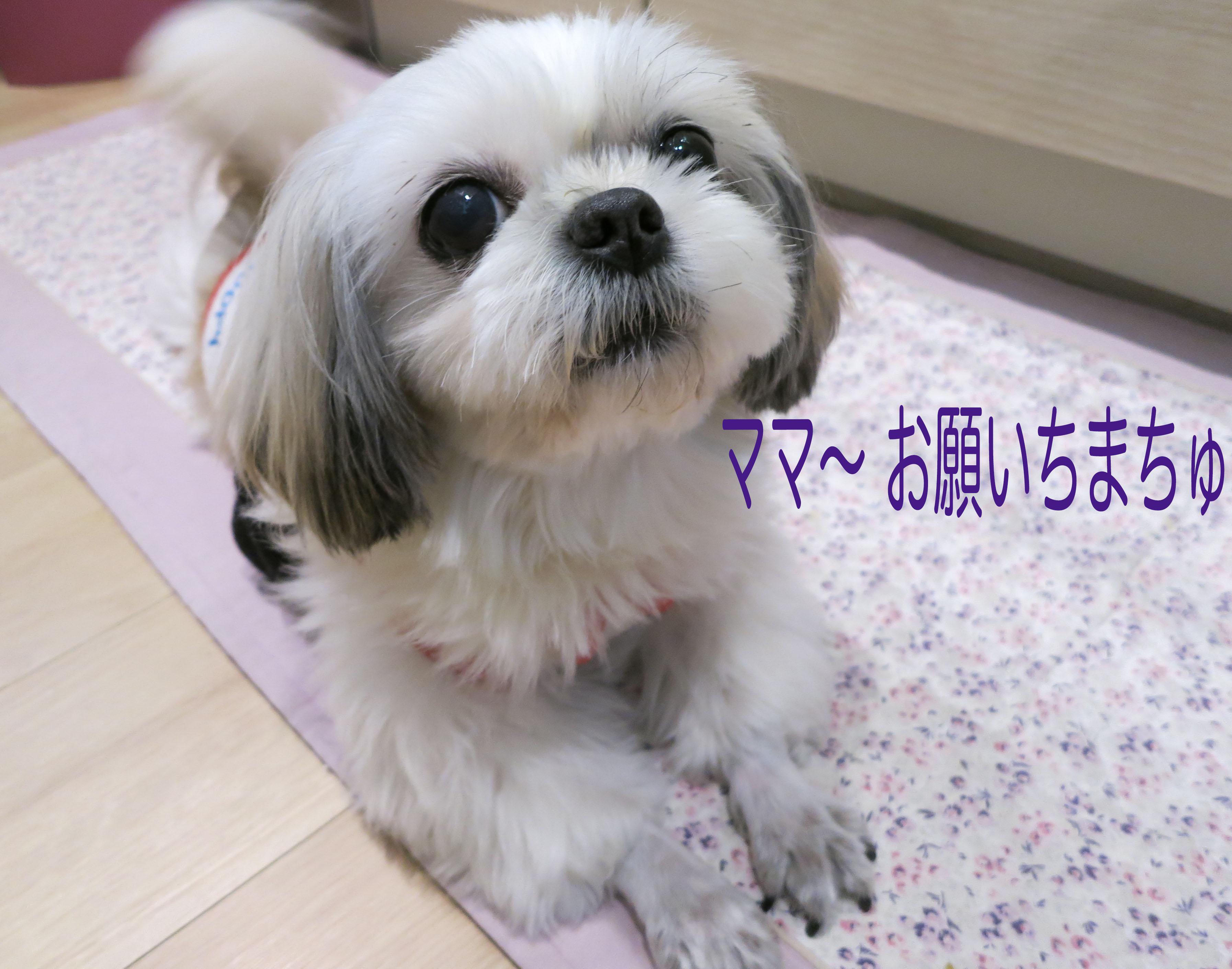 mikuhana5___3945.jpg