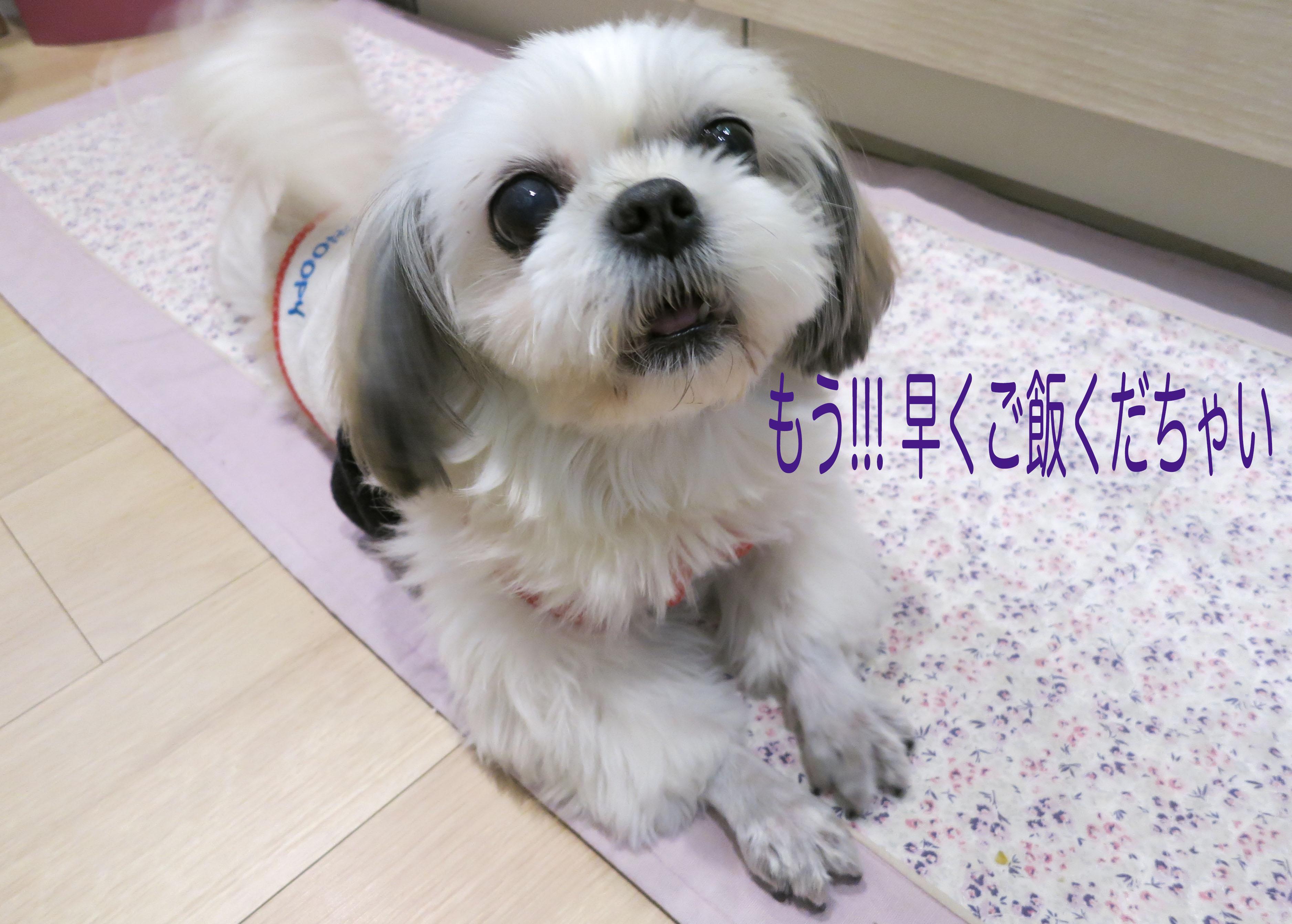 mikuhana6__3946.jpg