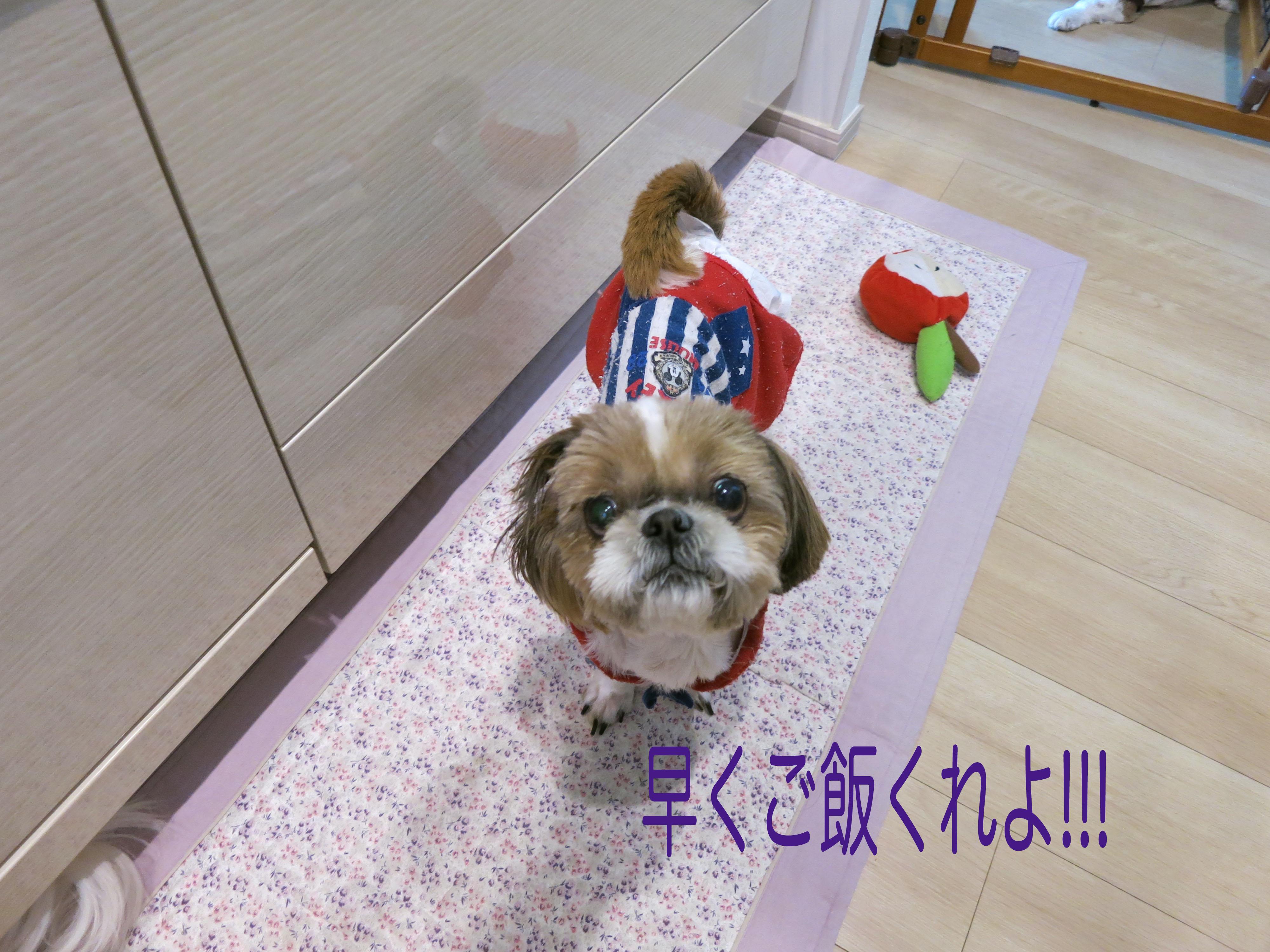 risa2__3959.jpg