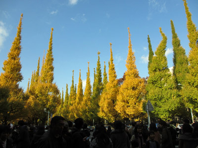 神宮外苑銀杏並木