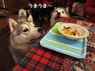 わんこディナー