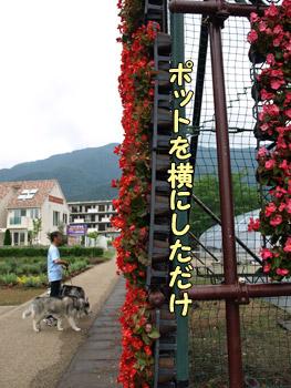 花のナイアガラ