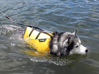 水が怖いトリュフ