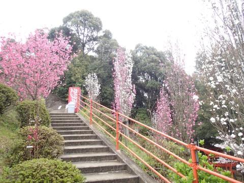mitachiyamanoohana14.jpg