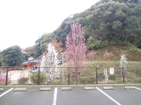 mitachiyamanoohana6.jpg