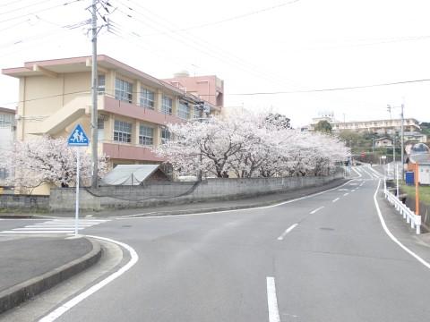 yuesyousakura17.jpg