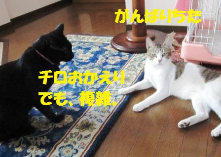 20120902200106192.jpg