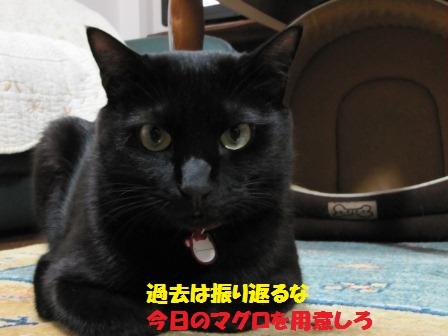 20121104163206762.jpg