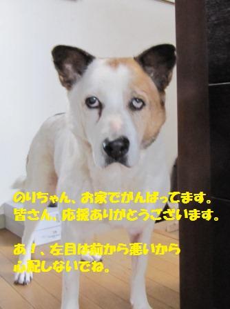 IMG_2689nori.jpg