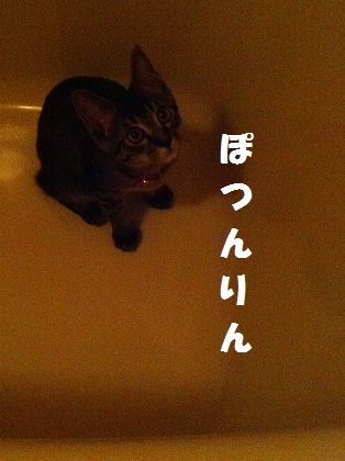 004_20120528015253_20120528034344.jpg