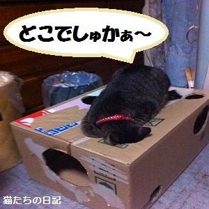 008_20120608040904_20120608052210.jpg