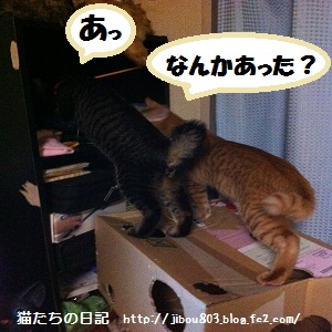037_20120617023506.jpg