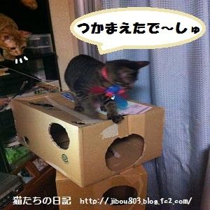 043_20120617024625.jpg
