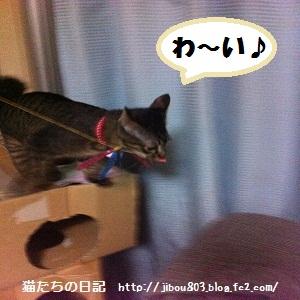 057_20120617024310.jpg