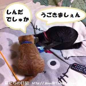 081_20120617020802.jpg