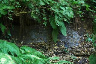 浦賀道(鎌倉):地下水の滲出
