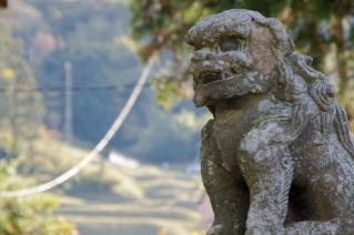 上山口・杉山神社:阿の狛犬と棚田