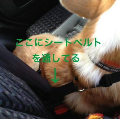 20121108192634f2f.jpg