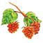 ファーストエイド ディープポアクレイRaspberry_leaf
