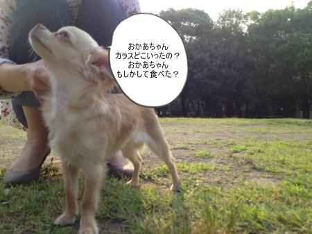 new_039_20120610101016.jpg