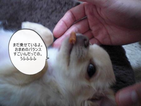 new_CIMG2644.jpg