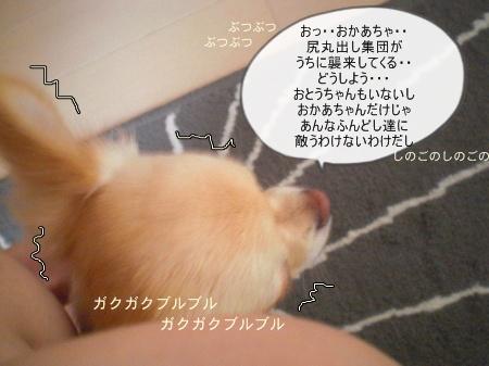 new_CIMG3911.jpg
